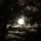 photo[1631] Moon 2 .JPG